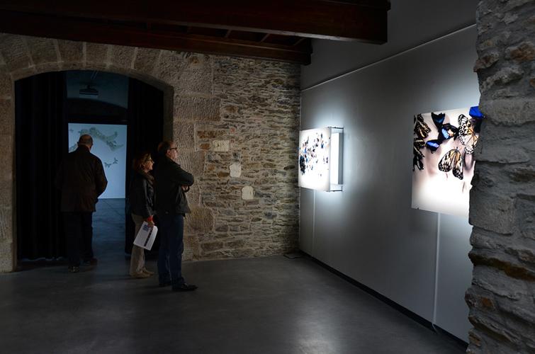 Travail photographique Nymphalis antiopa à l'espace d'art contemporain de la ville de Nantes, 2014
