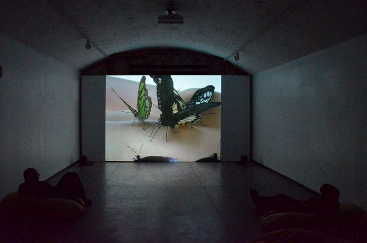 Video Nymphalis antiopa à l'espace d'art contemporain de la ville de Nantes, 2014